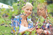 Gardeners looking at aronia crops — Foto Stock