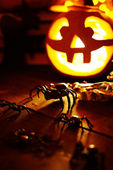 Halloween spiders and jack-o-lantern — Stock Photo
