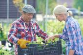 Gardeners looking after young plants — Stock Photo