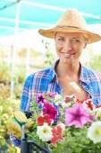 Female gardener with petunia flowers — Stock Photo