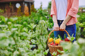 Farmer holding basket with vegetables — Stock Photo