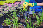 Gardener replanting green seedlings — Stock Photo