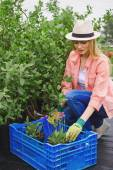 Farmer in hat replanting flowers — Stock Photo