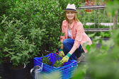 Gardener  replanting garden flowers — Stock Photo