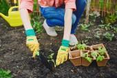 Woman replanting fresh seedlings in soil — Stock Photo