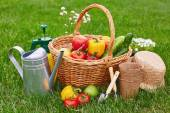 Basket with fresh harvest and gardening tools — Stock Photo