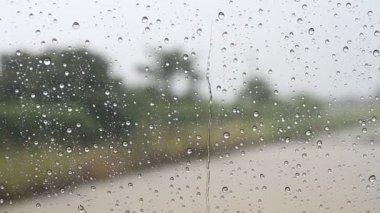 Rain — Stock Video