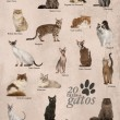 ������, ������: Cat breeds poster in Spanish