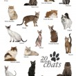 Cat breeds poster in French — Stock Photo #53298645