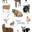Educational poster with farm animal in French — Stock Photo #53299921