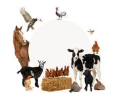 Group of farm animals surrounding a blank sign — Stock Photo