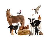 Group of farm animals — Stock Photo