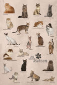 Cat breeds poster in German — Stock Photo