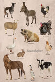 Educational poster with farm animal in German — Stock Photo