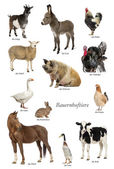 Educational poster with farm animal in German — Foto Stock