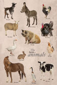 Educational poster with farm animal in English — Стоковое фото