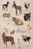 Educational poster with farm animal in English — Foto Stock