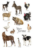 Educational poster with farm animal in French — Foto Stock