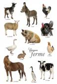 Educational poster with farm animal in French — Стоковое фото