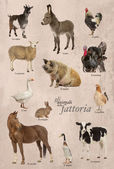 Educational poster with farm animal in Italian — Stockfoto