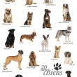 Dog breeds poster in French — Stock Photo #53300617