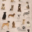 Dog breeds poster in French — Stock Photo #53300643