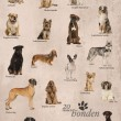 ������, ������: Dog breeds poster in Dutch