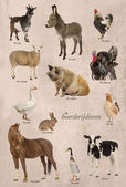 Educational poster with farm animal in Dutch — Стоковое фото
