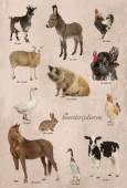 Educational poster with farm animal in Dutch — Stockfoto