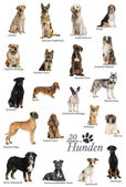 Dog breeds poster in German — Stock Photo