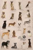 Dog breeds poster in English — Stock Photo