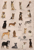 Dog breeds poster in Spanish — Stock Photo
