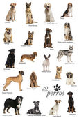 Dog breeds poster in Spanish — ストック写真