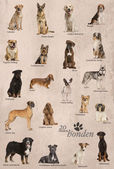 Dog breeds poster in Dutch — Stockfoto