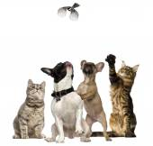 Cats and Dogs trying to catch a bird flying — Stock Photo