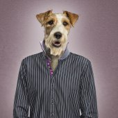 Parson russel terrier dressed — Stock Photo