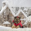 Yorkshire terrier in front of a Christmas scenery — Stock Photo #64393769