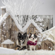 Chihuahuas in front of a Christmas scenery — Stock Photo #64394095