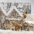 Chihuahuas in front of a Christmas scenery — Stock Photo #64394187