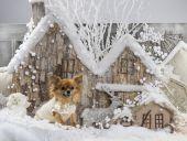 奇瓦瓦州在圣诞风景 — 图库照片