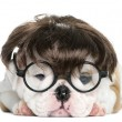 English bulldog puppy wearing a wig and glasses in front of whit — Stock Photo #77003021