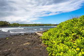 Succulents on the Black Sand Beach, Hawaii — Stock Photo