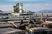 The sea lions on the piers, San Francisco — Fotografia Stock