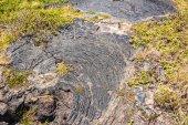 Vegetation on the lava field, Hawaii — Stock Photo