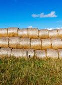 снопы сена в поле в солнце — Стоковое фото