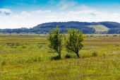 Two trees in a field in sunshine — Foto Stock