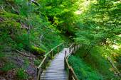 The wooden staircase in a forest  — Foto Stock