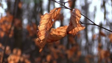 Dry autumn leaves in a forest — Stock Video