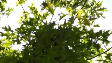 Tree branches in the sunlight against  sky — Stock Video