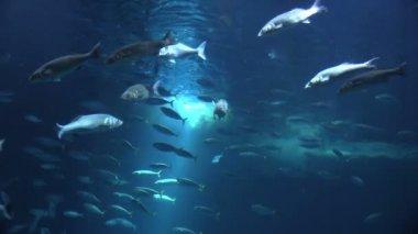 Escuela de peces en un acuario — Vídeo de Stock
